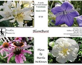 Note Cards:  BloomBurst; photographs by MM