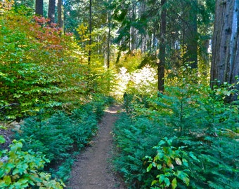 "Sunlit Forest Photo Canvas 16 x 20"", Forest Trail photo canvas"