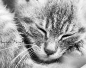 Animal Photography - Cat - Black & White Sleeping Kitty Print Monochromatic Nature Photograph Pet Art - Poster - Christmas Gift