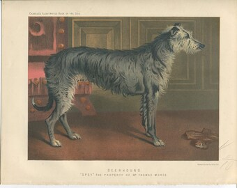 Vero Shaw - Antique Dog Print - Deerhound - Original Chromolithograph  - 1881 Book Of The Dog