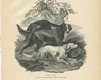 Vero Shaw - Antique Dog Print - Original lithograph  - 1881 Book Of The Dog - Early Setters