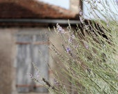 French Countryside Lavender, Fine Art Wall Print