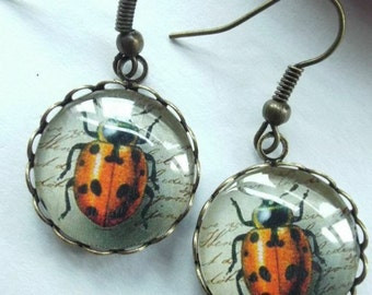 Bug earrings Steampunk Beetle jewelry Glass dome brass filigree insect accessories