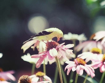 Photo Print - Goldfinch on Coneflower, Vintage Expired Film, Flowers and Birds Photography