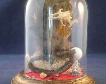 Taxidermy Chicken Foot & Snake in Glass Display dome--Voodoo/Crystal Ball
