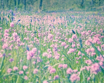 Wildflowers in Pink and Blue - Rosy plectritis and Camassia