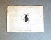 c. 1700s - Antique French Insect Engraving - Hand Painted - Published by J. St. fee.