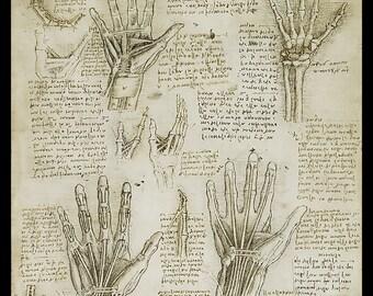 Anatomy - Metacarpal (Human Hand) - anatomical study - vintage image