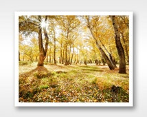 Home decor fine art photograph of autumn forest, 8x10/ 11x14