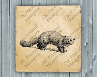 Angry Ferret Weasel Digital Download for collages fabric iron on T-shirt transfer burlap pillows Vintage image Instant printable Clip Art