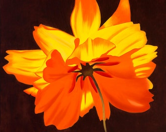 24x24 Beautiful Orange Cosmos, Bright and Cheerful, Giclee Stretched Canvas Print