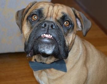 Pinstripe Suede Dog Bow Tie