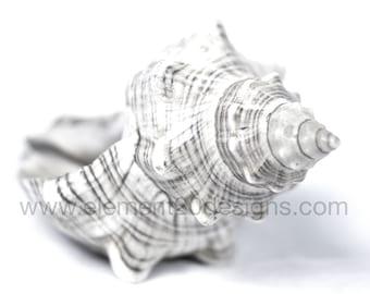 Seashell Photography Art Black White Digital File Nautical Beach Theme Large Scale Art Abstract Art Ocean