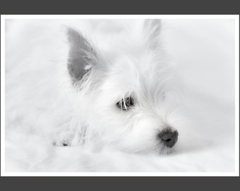 Black and White Dog Photography - West Highland Terrier  - Westie Puppy- Puppy Print - Baby Animal Print - White Dog Print