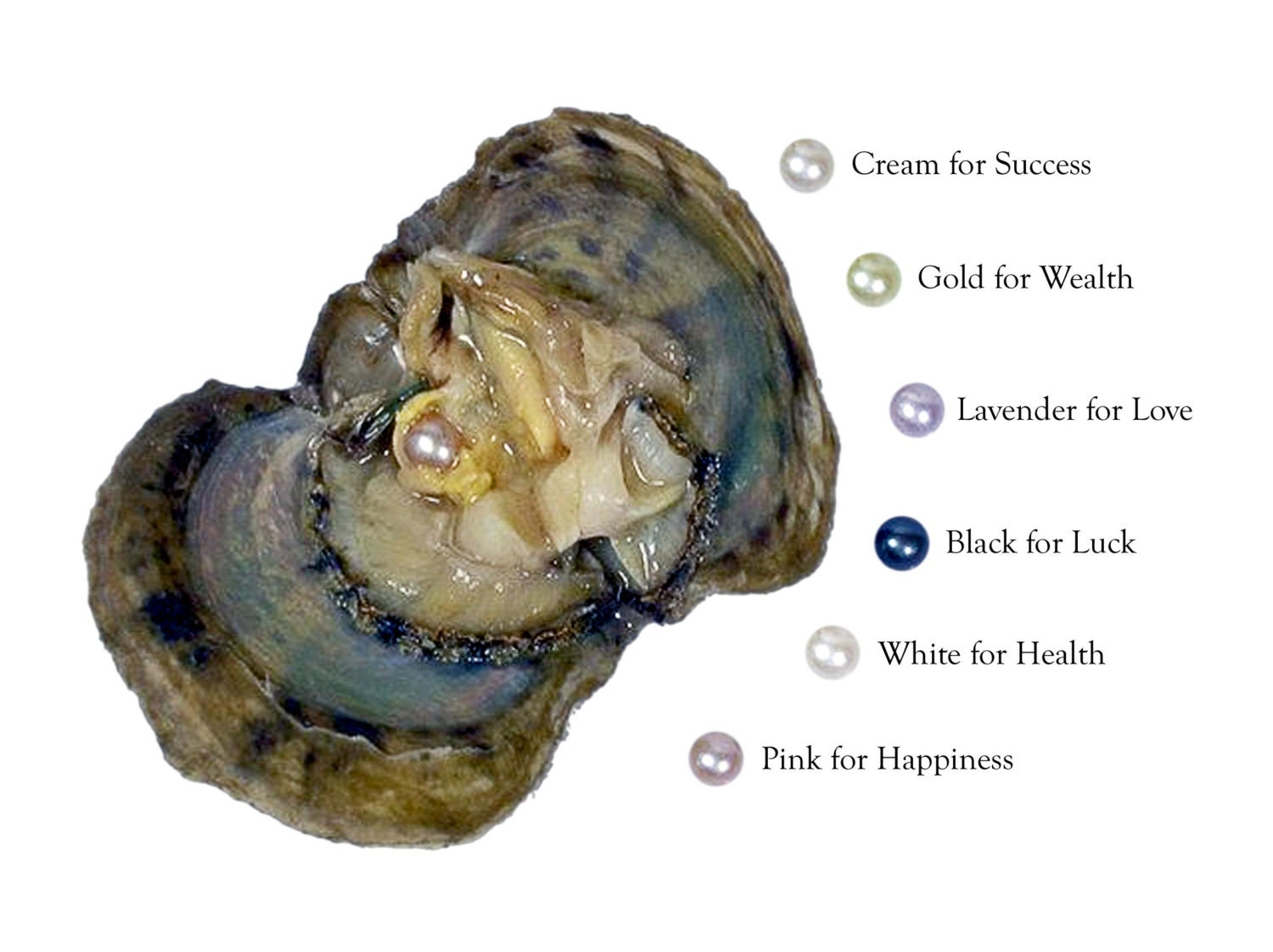 Pick A Pearl Oyster Kit Freshwater Pearl Wish Pearl Take Home
