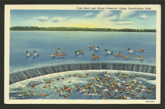 Vintage linen postcard fish bowl and game preserve upper for Pa fish and game
