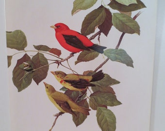 Vintage Scarlet Tanager 1970 Frameable Picture, Wall  Art Print of Bird Watercolor by  J.F. Lansdowne Item 488