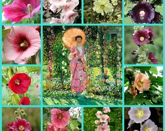 VikkiVines~RARE HOLLYHOCK COLLECTION ~ Sacred Edible Plant ~ 40 Seeds ~ Fun, Beautiful and Easy To Grow!