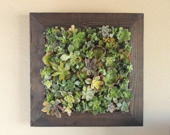 "Handmade Vertical Succulent Garden. 20"" x 20"". Great gift!"