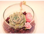 Small Succulent Arrangement Kit - Valentine's Day Decor -Great Gift or Centerpiece - DIY Kit in Glass Bowl with Pink Heart, Purple Rocks