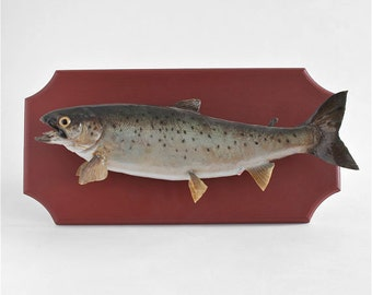 Popular Items For Fish Taxidermy On Etsy