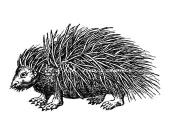 Porcupine Digital Vintage Graphic