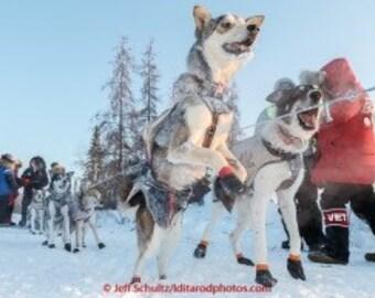 4 Vintage dog booties from the Alaska Iditarod Race,