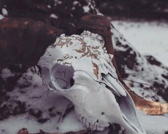 The Pearl Engagement Ram Skull