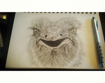 Realistic Ostrich pencil drawing 5.5x10 inches