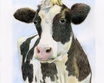 Cow drawing, colored pencil