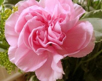 Carnation Grenadin Rose Flower Seeds (Dianthus Caryophyllus) 50+Seeds