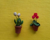 Itty bitty tulips and red geranuims