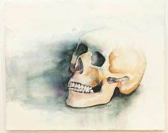 Human Skull Anatomy Watercolor Painting - Original Art