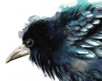 Bird watercolor - Crow print. Nature or Bird Illustration, Crow, Raven, Black