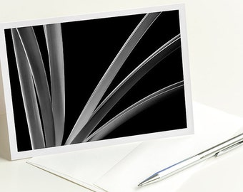 Amaryllis: Greeting card, note card, a close up black and white photograph of a beautiful Amaryllis plant, fine art photography, Minimalist