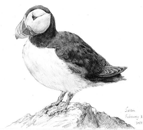 Puffin Bird Drawings