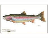 Rainbow Trout Open Edition Print by Flick Ford, Western native trout, 'bow, natural history art, fish art, freshwater gamefish picture