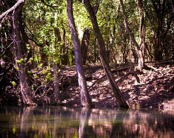 Comal River, Fine Art Photography, Travel photography, peaceful, trees, branches, wall art brown green blue print vibrant decor photo