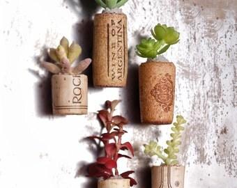 Isleta Magnetic Wine Cork Garden Set of 5