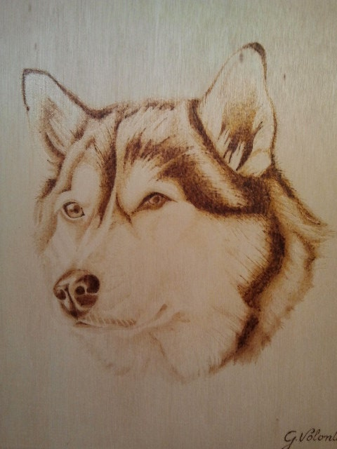 chien husky pyrogravure sur bois panneau. Black Bedroom Furniture Sets. Home Design Ideas