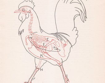 Vintage Rooster Anatomy Print Chicken Bird Skeleton Color Illustration Book Plate