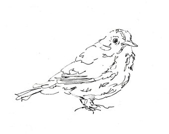 Bird Art Print - Warbler - songbird, giclee print, line drawing, pen ink