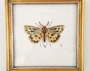 Anna Tiger Moth original watercolor painting framed