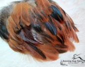 """Plumage Feathers Natural Plumes Real Bird Feathers Eco Feathers Loose Feathers Red Americana Rooster Feathers Eco 20 @ 4"""" - 4.5"""" / 919"""