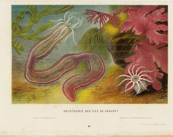 Antique print 1880 Antique SEA LIFE print, ringed worm, Deep water sea creature, seaweeds