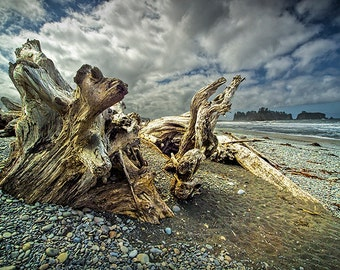 Driftwood on Rialto Beach on the Pacific Ocean in Olympic National Park Washington State No.1392 A Seascape Nature Photograph