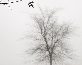winter photography, fog photography, minimalist photography, landscape, nature, tree photography, trees, January