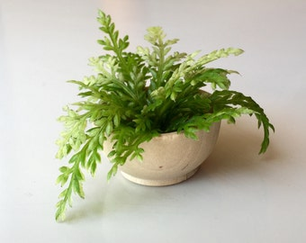 1:6 scale Fern Plant wood bowl for OOAK Dollhouse or Diorama (Blythe, Barbie, 12'' Fashion dolls, Bratz, Momoko)