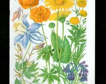 Vintage Botanical Print Antique FLOWERS, plant print botanical print, bookplate 39 art print, yellow plants plant wall