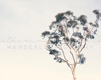 Eucalyptus - Photographic Print - California, Bohemian, tree, minimalist, Dana Point, boho, chic, green,  Photograph, Wall, Art, Hanging,